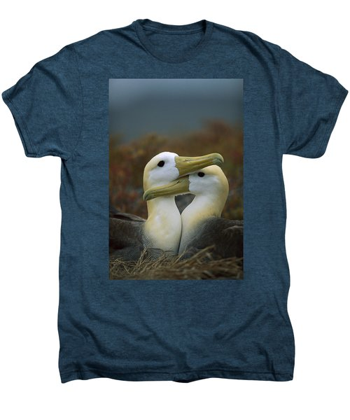 Waved Albatross Pair Bonding Galapagos Men's Premium T-Shirt by Tui De Roy