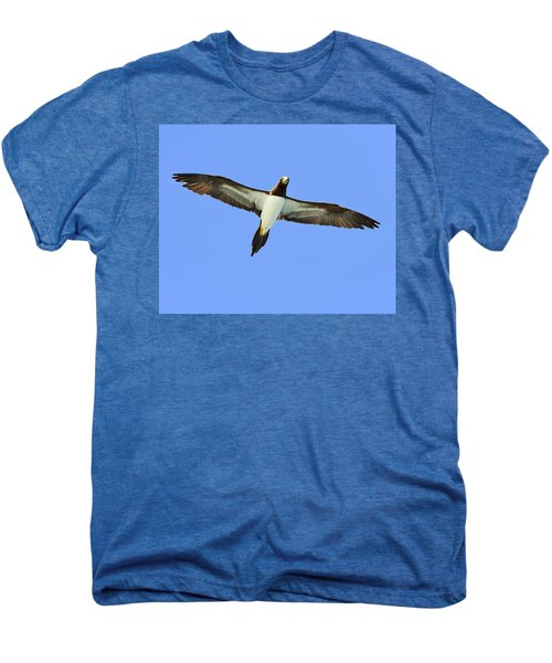 Brown Booby Men's Premium T-Shirt by Tony Beck