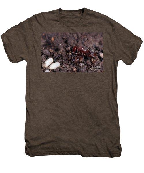 Ant Queen Fight Men's Premium T-Shirt by Gregory G. Dimijian, M.D.