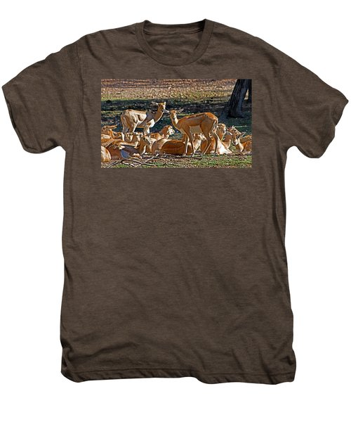 Blackbuck Female And Fawns Men's Premium T-Shirt by Miroslava Jurcik