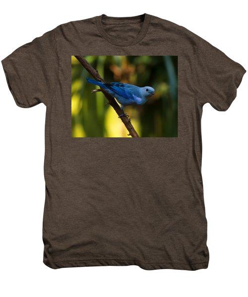 Blue Grey Tanager Men's Premium T-Shirt