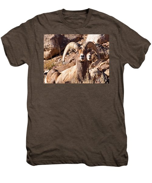 Desert Bighorn Sheep Men's Premium T-Shirt