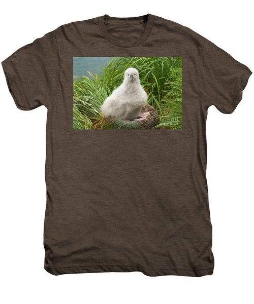 Grey-headed Albatross Chick Men's Premium T-Shirt by Yva Momatiuk John Eastcott