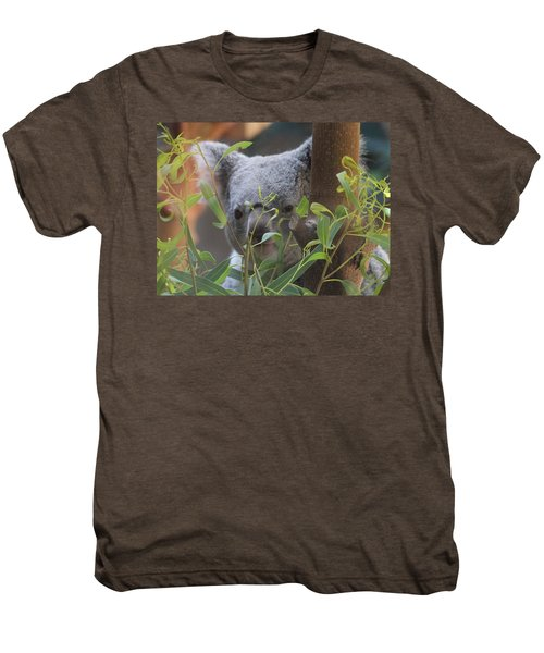 Koala Bear  Men's Premium T-Shirt by Dan Sproul