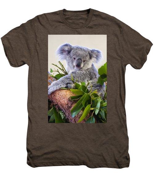 Koala On Top Of A Tree Men's Premium T-Shirt