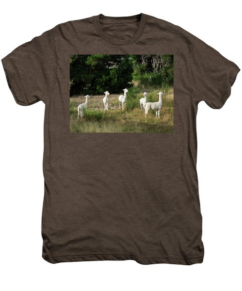 Llamas Standing In A Forest Men's Premium T-Shirt by Panoramic Images