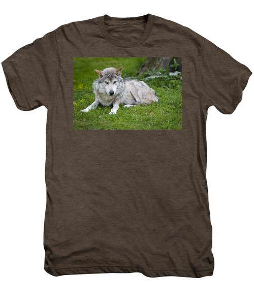 Men's Premium T-Shirt featuring the photograph Mexican Gray Wolf by Sebastian Musial