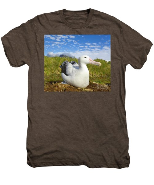 Wandering Albatross Incubating  Men's Premium T-Shirt by Yva Momatiuk John Eastcott