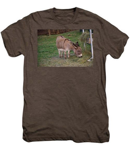 Young Donkey Eating Men's Premium T-Shirt
