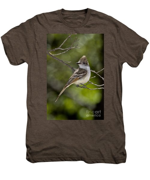 Ash-throated Flycatcher Men's Premium T-Shirt by Anthony Mercieca
