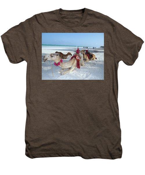 Camel On Beach Kenya Wedding4 Men's Premium T-Shirt
