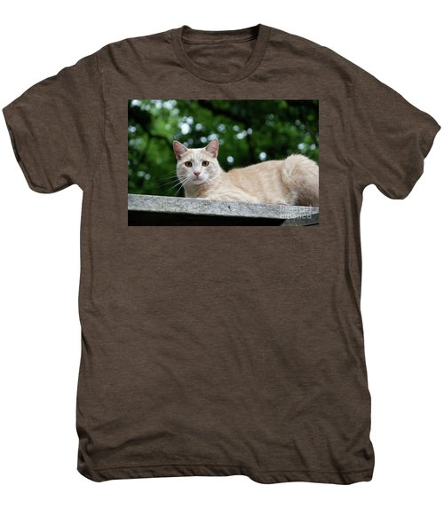Orange Tabby Men's Premium T-Shirt