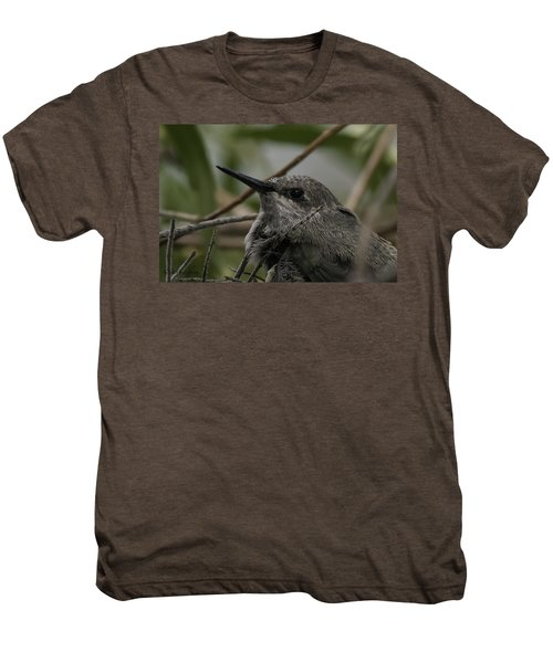 Baby Humming Bird Men's Premium T-Shirt by Lynn Geoffroy