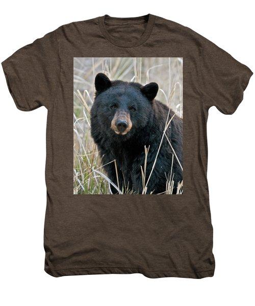 Black Bear Closeup Men's Premium T-Shirt