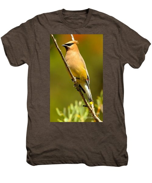 Cedar Waxwing Men's Premium T-Shirt by Adam Jewell