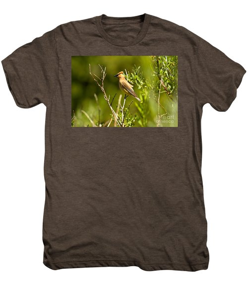 Cedar Waxwing At Glacier Men's Premium T-Shirt by Adam Jewell