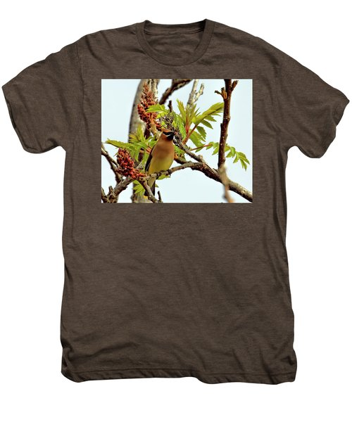 Cedar Waxwing Having A Snack  Men's Premium T-Shirt