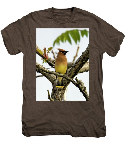 Cedar Waxwing - Spring Visitor Men's Premium T-Shirt