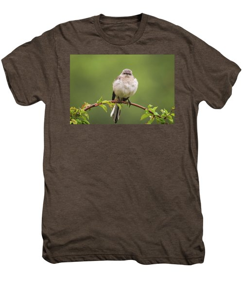 Fluffy Mockingbird Men's Premium T-Shirt by Terry DeLuco