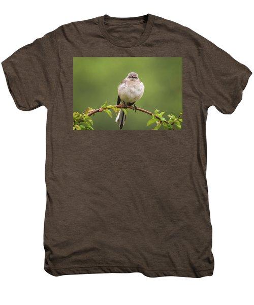 Fluffy Mockingbird Men's Premium T-Shirt