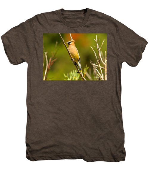 Glacier Cedar Waxwing Men's Premium T-Shirt by Adam Jewell