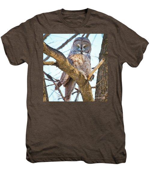 Great Gray Owl Men's Premium T-Shirt