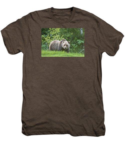 Grizzly Bear Men's Premium T-Shirt