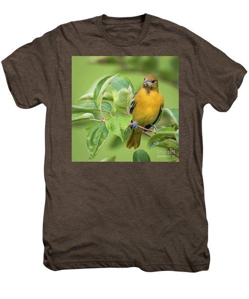 Immature Baltimore Oriole  Men's Premium T-Shirt