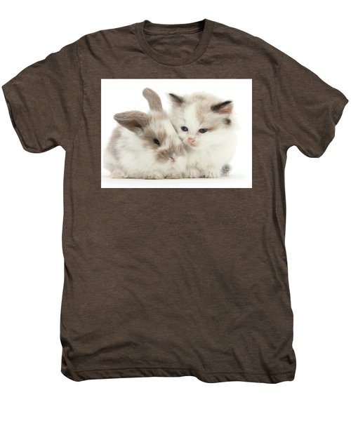 Kitten Cute Men's Premium T-Shirt