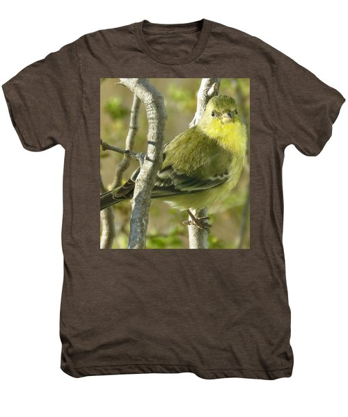 Lesser Goldfinch 1 Men's Premium T-Shirt