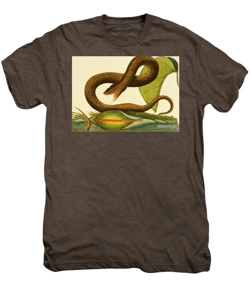 Viper Fusca Men's Premium T-Shirt by Mark Catesby