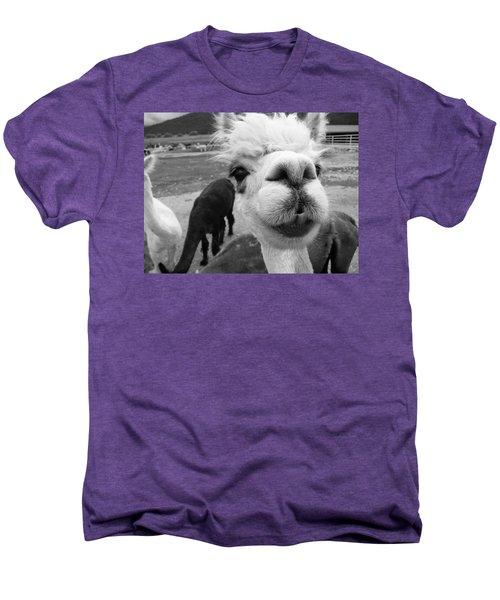Alpaca Face Men's Premium T-Shirt