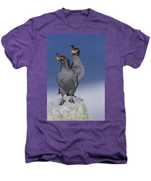 Crested Auklet Pair Men's Premium T-Shirt