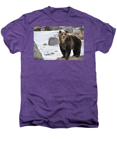 Montana Grizzly  Men's Premium T-Shirt