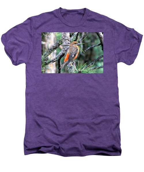 Red Crossbill On Pine Tree Men's Premium T-Shirt