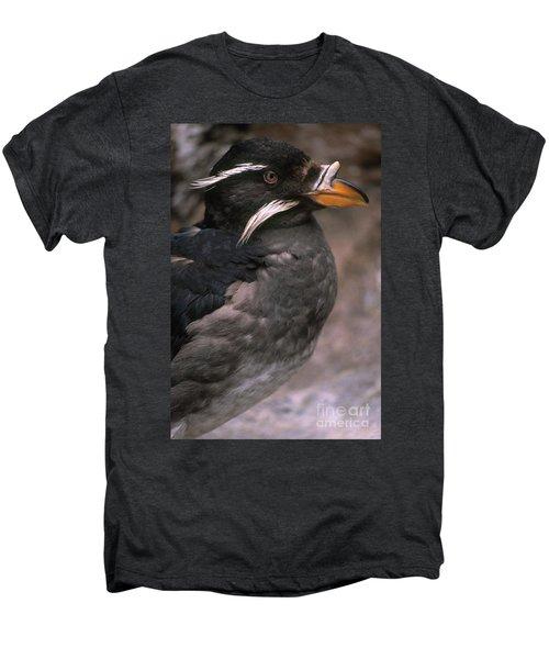 Rhinoceros Auklet Men's Premium T-Shirt