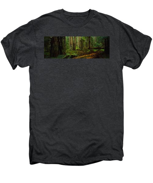 Trees In A Forest, Hoh Rainforest Men's Premium T-Shirt