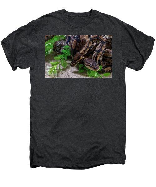 Two Burmese Pythons Python Bivittatus Men's Premium T-Shirt