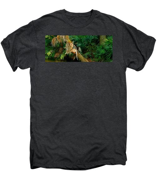 Anhinga Anhinga Anhinga On A Tree Men's Premium T-Shirt by Panoramic Images