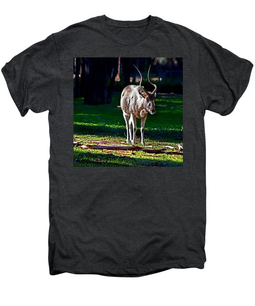 Addax Men's Premium T-Shirt by Miroslava Jurcik