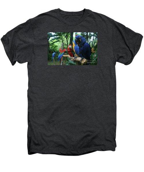 Aloha Kaua Aloha Mai No Aloha Aku Beautiful Macaw Men's Premium T-Shirt by Sharon Mau