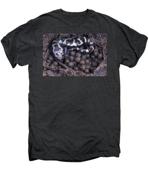 An Endangered Marbled Salamander Nests Men's Premium T-Shirt