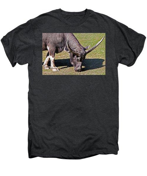 Asian Water Buffalo  Men's Premium T-Shirt by Miroslava Jurcik