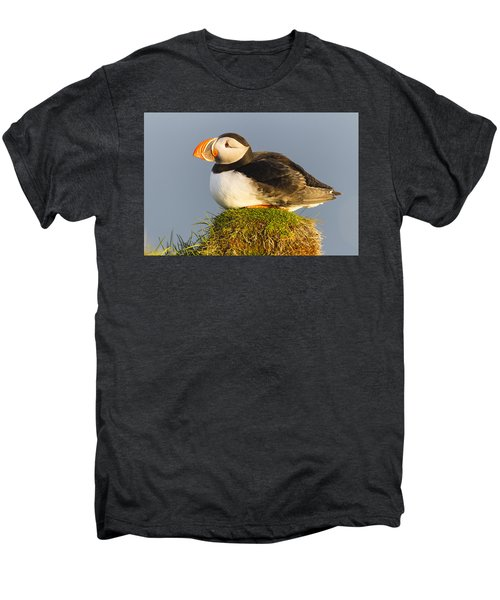 Atlantic Puffin Iceland Men's Premium T-Shirt