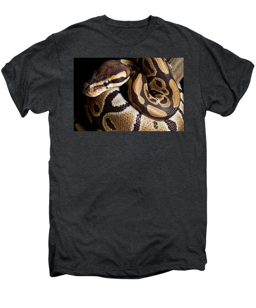 Ball Python Python Regius Men's Premium T-Shirt by David Kenny