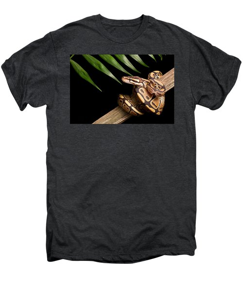 Ball Python Python Regius On Branch Men's Premium T-Shirt by David Kenny