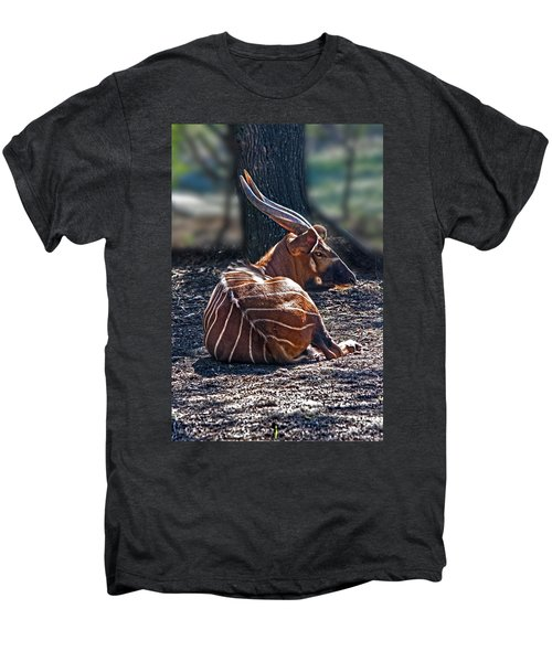 Bongo Men's Premium T-Shirt by Miroslava Jurcik
