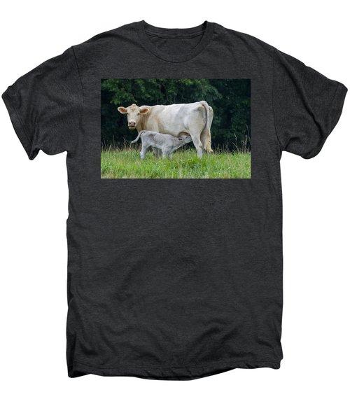 Charolais Cattle Nursing Young Men's Premium T-Shirt
