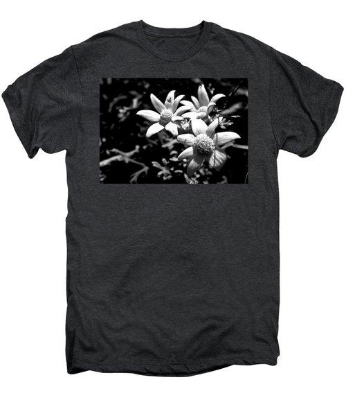 Men's Premium T-Shirt featuring the photograph Flannel Flower by Miroslava Jurcik