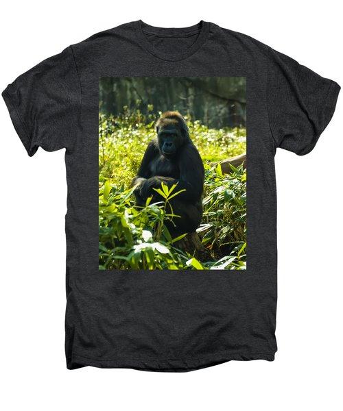 Gorilla Sitting On A Stump Men's Premium T-Shirt